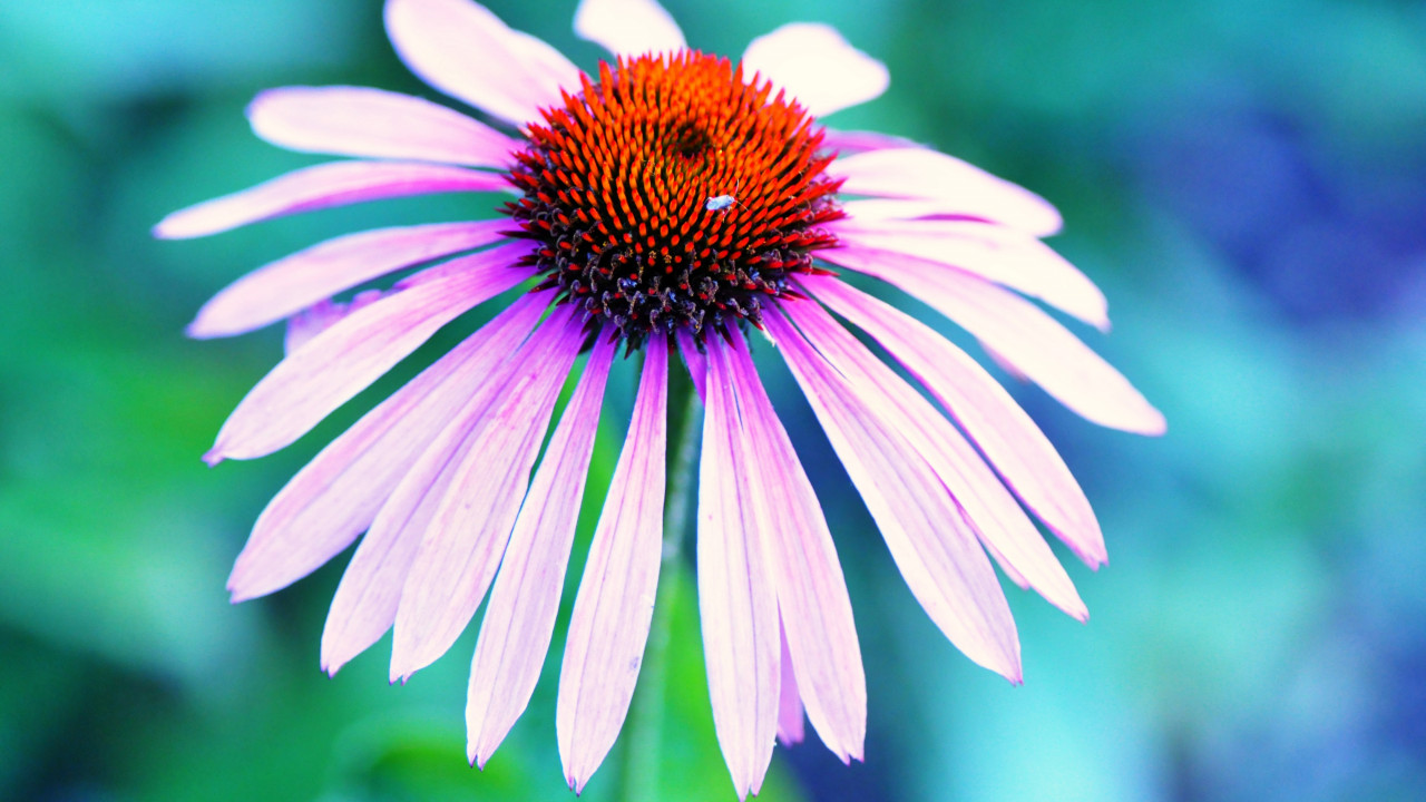 A HAY FEVER CURE IS JUST 3 YEARS AWAY